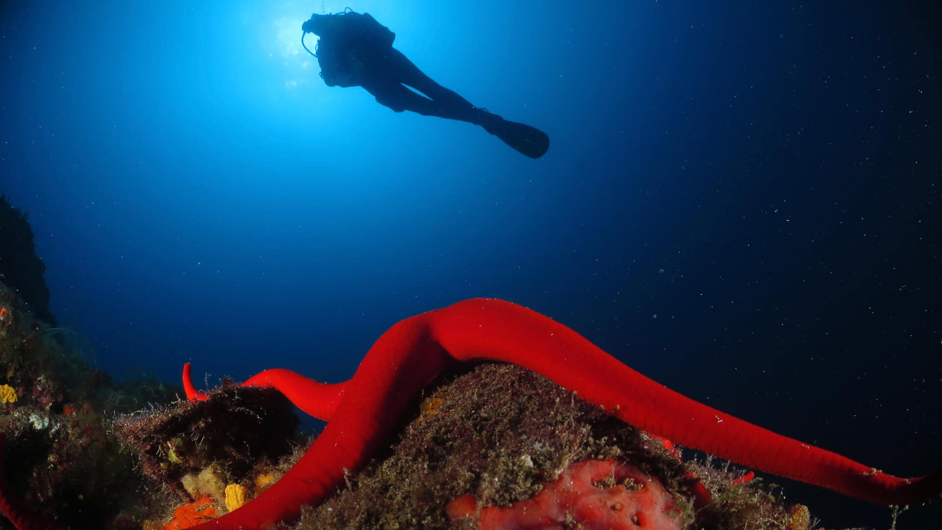 aprovechate sumergete buceo canarias Lanzarote Buceo