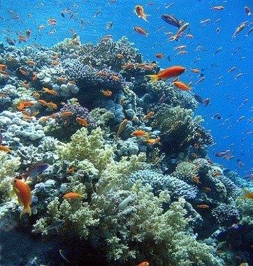 curcero mar rojo ruta norte Lanzarote Buceo